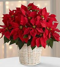 The Red Poinsettia Basket by FTD - large
